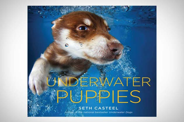 Underwater Puppies by Photographer Seth Casteel, Sequel to Underwater Dogs